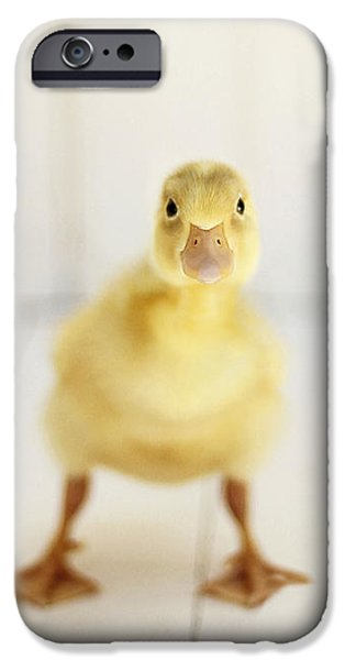 Ducks iPhone Cases - Ready to Rumble iPhone Case by Amy Tyler