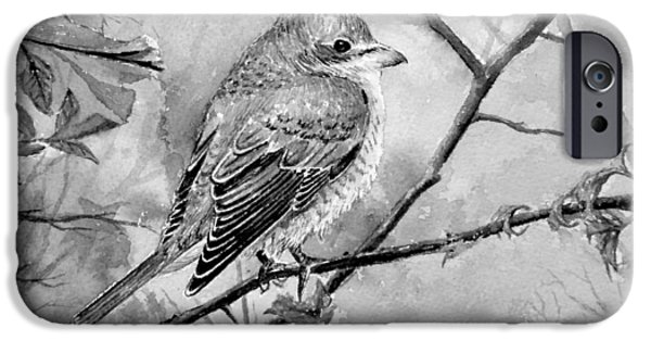 Europa Paintings iPhone Cases - Red Backed Shrike iPhone Case by Andrew Read