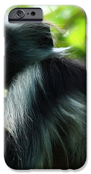 Red Colobus Monkey iPhone Case by Aidan Moran