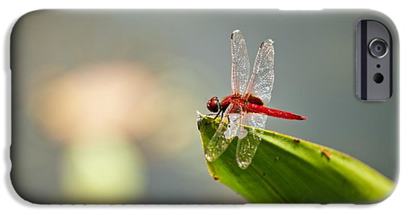 Lightweight iPhone Cases - Red dragonfly iPhone Case by Ulrich Schade