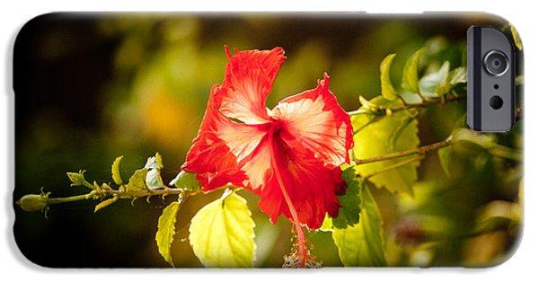 Tibetan Buddhism iPhone Cases - Red flower iPhone Case by Raimond Klavins