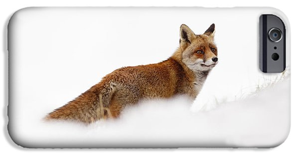 Hiding Photographs iPhone Cases - Red Fox in a White World iPhone Case by Roeselien Raimond