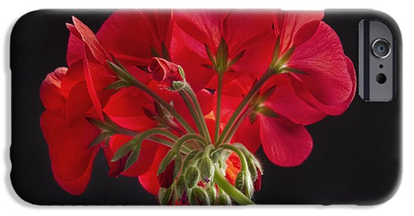 Red Geraniums iPhone Cases - Red Geranium In Progress iPhone Case by James BO  Insogna