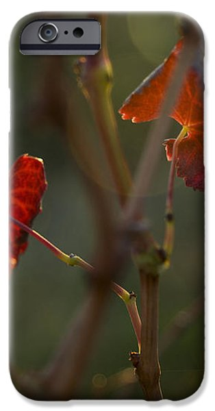 Red Grape Leaves iPhone Case by Charmian Vistaunet