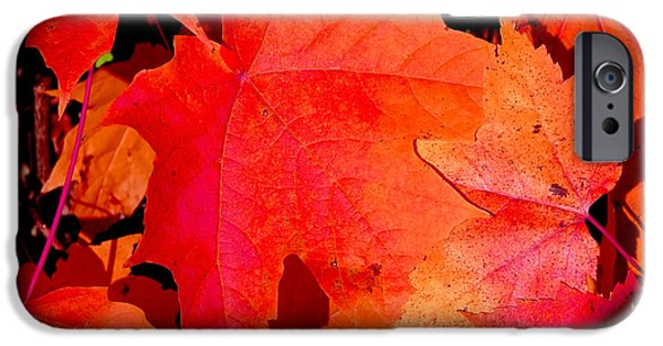 Fall iPhone Cases - Red  maple leaves on the ground. iPhone Case by Sylvie Bouchard