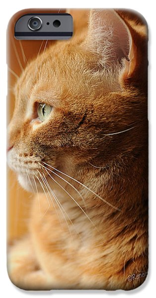 Orange Tabby iPhone Cases - Red Tabby Cat iPhone Case by Renee Forth-Fukumoto