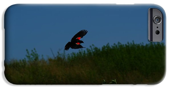 Creative Blackbird iPhone Cases - Red Winged Blackbird iPhone Case by Andrew Lahay