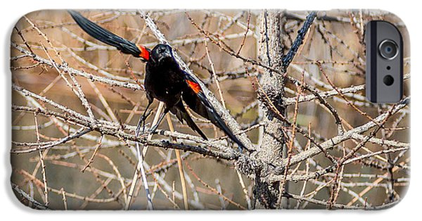 Birds iPhone Cases - Red winged Blackbird iPhone Case by Mike Houghton BlueMaxPhotography