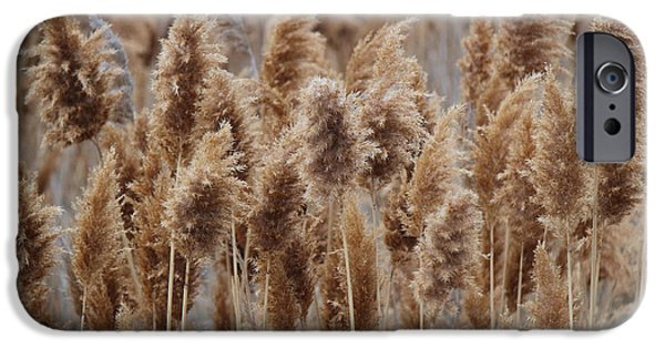 Redish iPhone Cases - Wind Blown Redish Brown Plants iPhone Case by Jackie Farnsworth