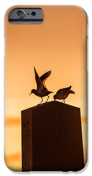 Seabird iPhone Cases - Redshank Tringa Totanus, Flatey Island iPhone Case by Panoramic Images