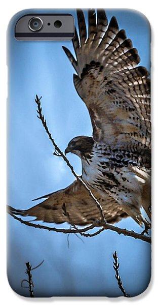Redtail Hawk iPhone Cases - Redtail Hawk iPhone Case by Ernie Echols