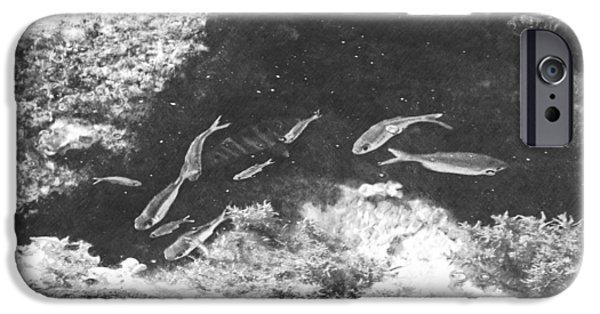Frank Ocean Drawings iPhone Cases - Reef Tide Pool iPhone Case by Frank Wilson