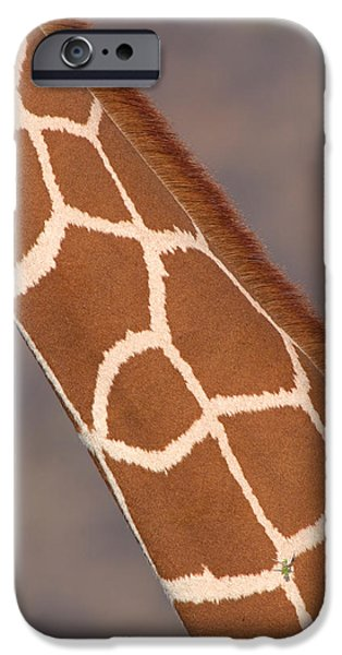 Bonding iPhone Cases - Reticulated Giraffe Giraffa iPhone Case by Panoramic Images