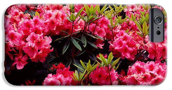 State Parks In Oregon iPhone Cases - Rhododendrons Plants In A Garden, Shore iPhone Case by Panoramic Images