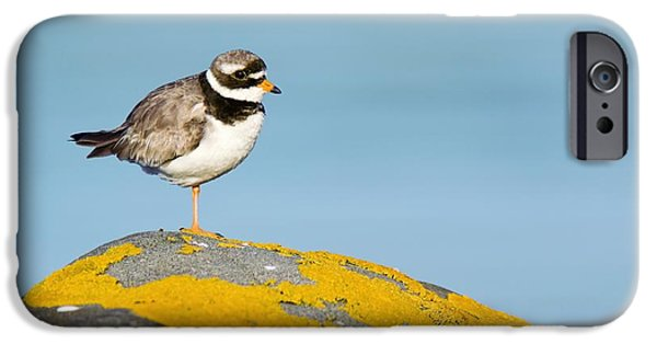 Alga iPhone Cases - Ringed Plover On A Lichen-covered Rock iPhone Case by Duncan Shaw
