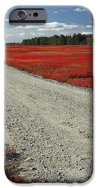 Road Through Autumn Blueberry Maine iPhone Case by Scott Leslie
