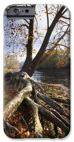 Willow Lake iPhone Cases - Roots iPhone Case by Debra and Dave Vanderlaan