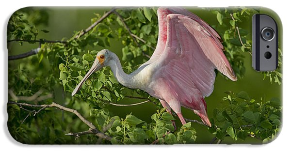 Spoonbill iPhone Cases - Roseate Spoonbill iPhone Case by Anthony Mercieca