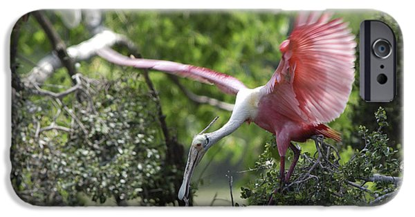 Spoonbill iPhone Cases - Roseate Spoonbill With Stick For Nest iPhone Case by Gregory G. Dimijian