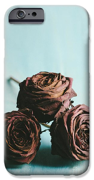 Natural Pyrography iPhone Cases - Roses iPhone Case by Jelena Jovanovic