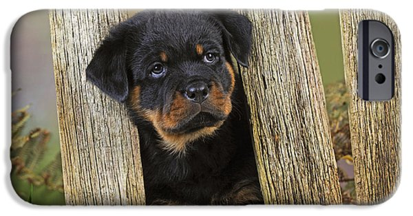Rottweiler Puppy iPhone Cases - Rottweiler Puppy Dog iPhone Case by John Daniels