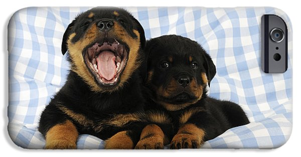 Rottweiler Puppy iPhone Cases - Rottweiler Puppy Dogs iPhone Case by John Daniels