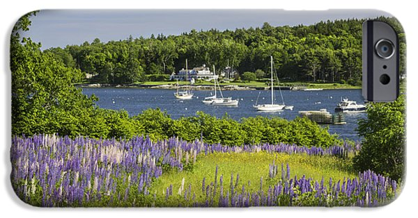 Maine Seascapes iPhone Cases - Round Pond Lupine Flowers on The Coast Of Maine iPhone Case by Keith Webber Jr
