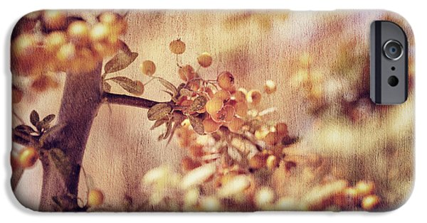 Flora iPhone Cases - Rowanberry background iPhone Case by Anna Omelchenko