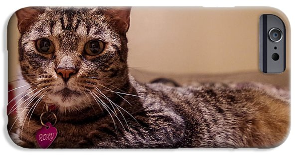 Pictures Of Cats Photographs iPhone Cases - Roxy iPhone Case by Raymond Collins
