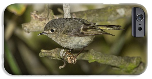 Fauna iPhone Cases - Ruby-crowned Kinglet iPhone Case by Anthony Mercieca
