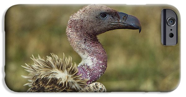 Vulture iPhone Cases - Ruppells Vulture iPhone Case by John Shaw