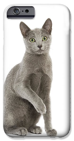 Gray Hair iPhone Cases - Russian Blue Cat iPhone Case by Jean-Michel Labat