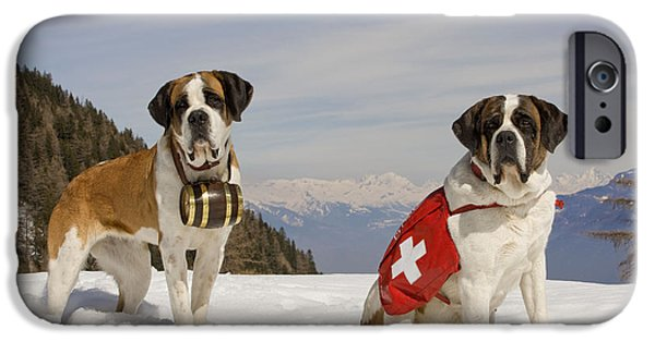 Dog In Landscape iPhone Cases - Saint Bernards iPhone Case by Jean-Michel Labat