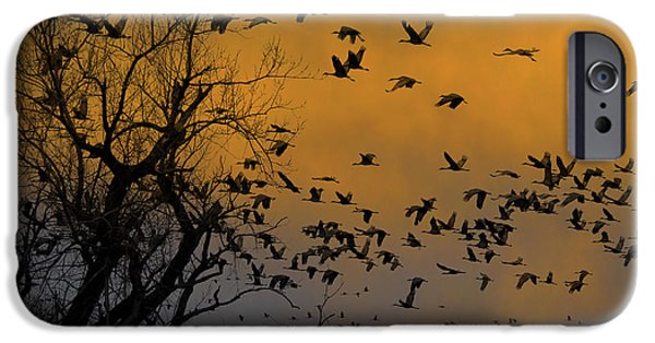 Nebraska iPhone Cases - Sandhill Cranes iPhone Case by Mark Newman