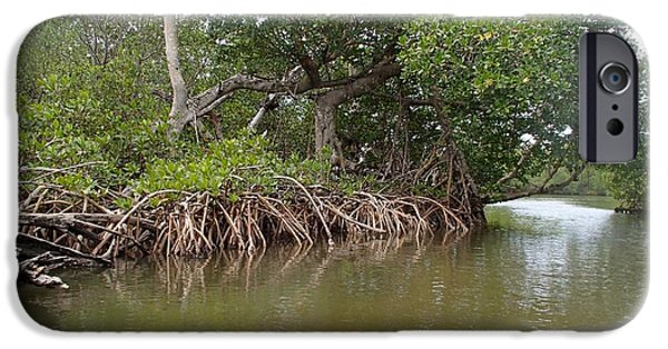 Mangrove Forest iPhone Cases - Sanibel Mangroves iPhone Case by Curtis Krusie