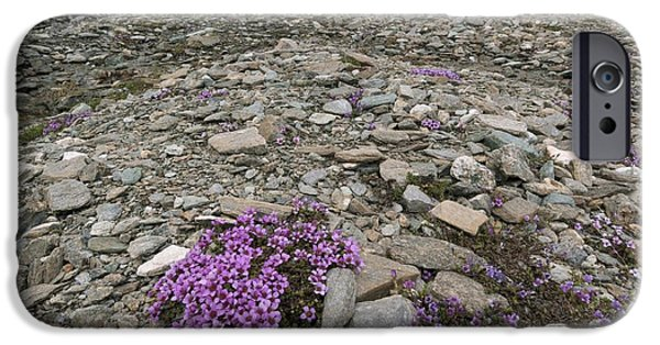 July iPhone Cases - Saxifraga Oppositifolia iPhone Case by Duncan Shaw
