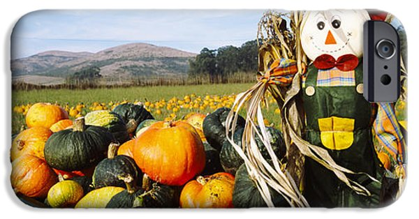 Half Moon Bay iPhone Cases - Scarecrow In Pumpkin Patch, Half Moon iPhone Case by Panoramic Images