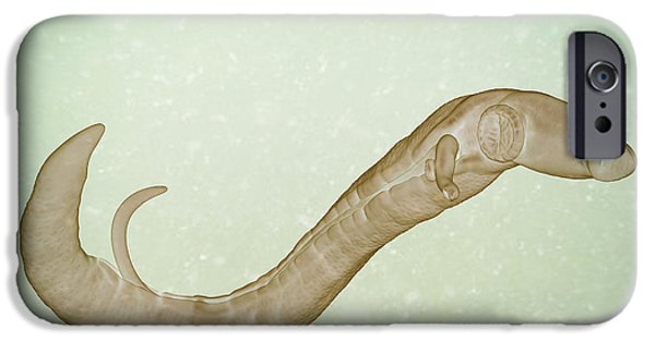 Sickness iPhone Cases - Schistosoma Parasite Worm iPhone Case by Science Picture Co