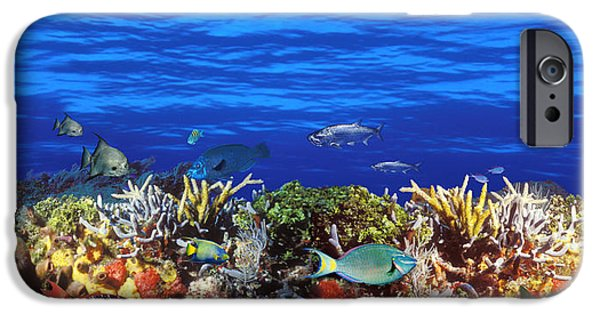 Animal Themes iPhone Cases - School Of Fish Swimming Near A Reef iPhone Case by Panoramic Images