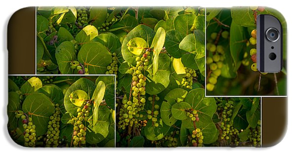 J N Ding Darling National Wildlife Refuge iPhone Cases - Sea Grapes iPhone Case by Nancy L Marshall