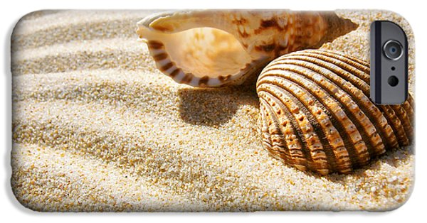 Abstract Seascape Photographs iPhone Cases - Seashell and Conch iPhone Case by Carlos Caetano