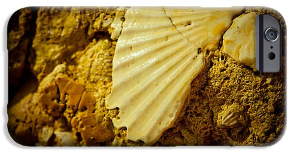 Coast Pyrography iPhone Cases - Seashell in stone iPhone Case by Raimond Klavins