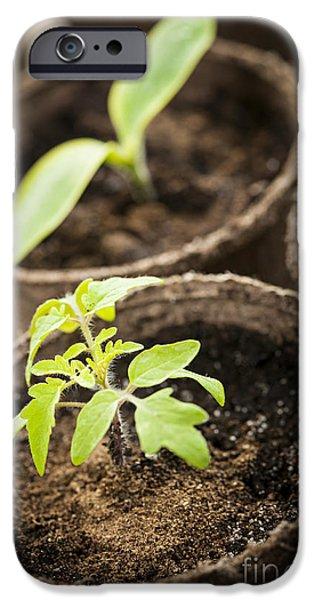 New Individuals iPhone Cases - Seedlings  iPhone Case by Elena Elisseeva