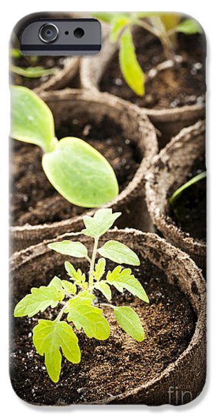 Young Photographs iPhone Cases - Seedlings growing in peat moss pots iPhone Case by Elena Elisseeva