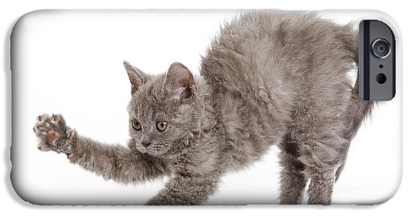 Gray Hair iPhone Cases - Selkirk Rex Kitten iPhone Case by Jean-Michel Labat