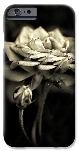 Sepia Flowers iPhone Cases - Sepia Rose iPhone Case by Jessica Jenney