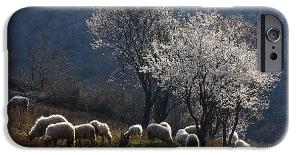 Recently Sold -  - Dog Close-up iPhone Cases - Sheep iPhone Case by Nino Marcutti