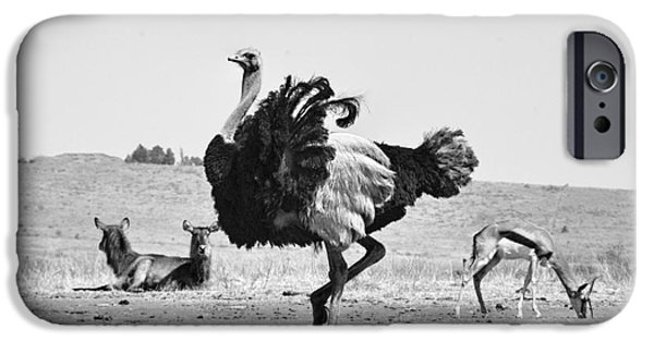 Ostrich iPhone Cases - Show-Off iPhone Case by Douglas Barnard