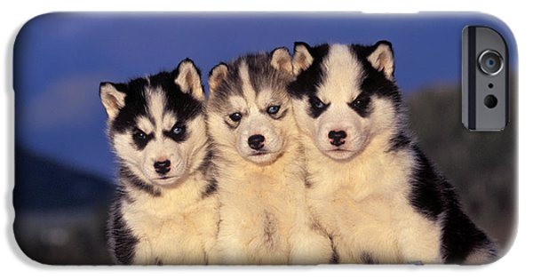 Husky iPhone Cases - Siberian Husky Puppies iPhone Case by Rolf Kopfle