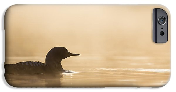 Loon iPhone Cases - Silhouette in Gold iPhone Case by Tim Grams